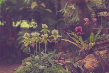Streaked orchid flowers vintage tone