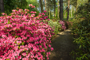 The rhododendron park, Bremen.