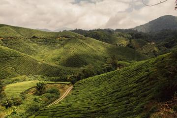 Poster de jardin Colline Plantacja herbaty w Malezji, Cameron Highlands