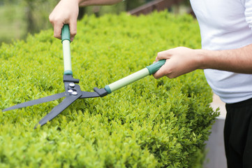 Cutting bush clippers