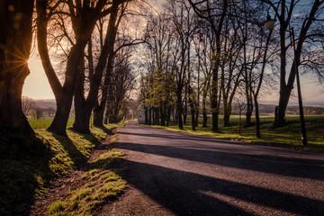 droga asfaltowa o poranku