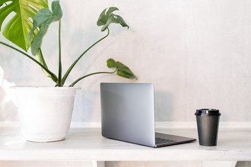 Laptop with a Cup of coffee on the table with a green flower