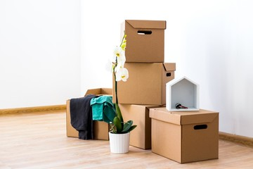 Cardboard boxes with clothes and Orchid flower stand on the floor in an empty room