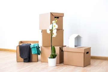 Cardboard boxes with clothes and Orchid flower stand in an empty room