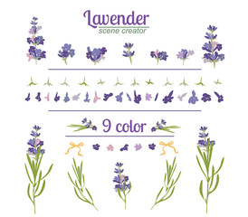 Lavender flower on white background. Colorful vintage vector illustration