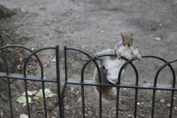 Stretching squirrel