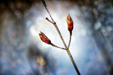 What of Winter Remains 6