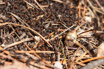 Ants working in the anthill