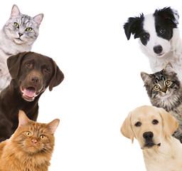 Haustiere isoliert auf weißem Hintergrund