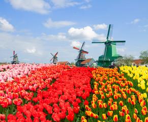 view of  Zaanse Schans