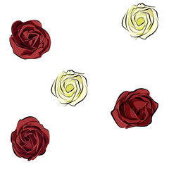 rose red and white isolated on white background separately