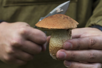 Mushroom picker holds a knife in his hands
