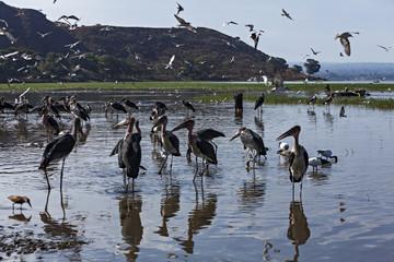 ethiopian marabouts fishing in the lake