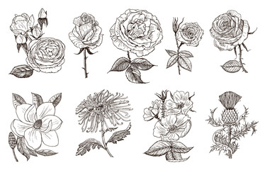 Set of Wedding botanical flowers in the garden or spring plant. Aster, dahlia with buds, peonies and roses, daffodils. Vector illustration. engraved hand drawn in old vintage sketch for card.