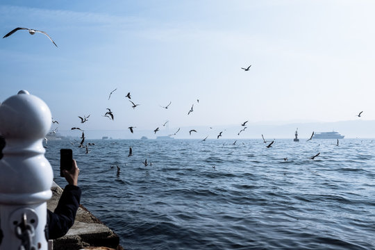 View of seagulls flying over the sea