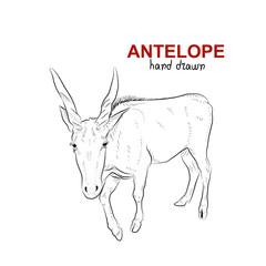 Sketch of antelope. Handmade drawn.