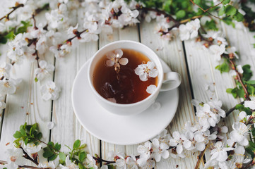 Cup of green tea and spring apricot blossom on a light grey wooden background. Rustic.