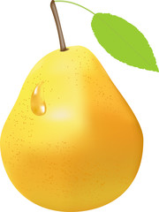 vector drawing of yellow pear fruit
