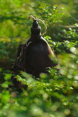 vintage leather canteen laying on a mossy ground in forest