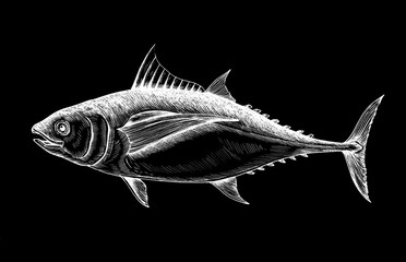 Hand drawn tuna fish