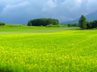 Foto op Plexiglas Pistache 北海道の夏の田園風景