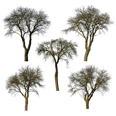 Set of trees without leaves isolated on white background.