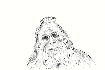 Portrait of the legendary Bigfoot. Yeti is a mysterious humanoid creature survived since prehistoric times.