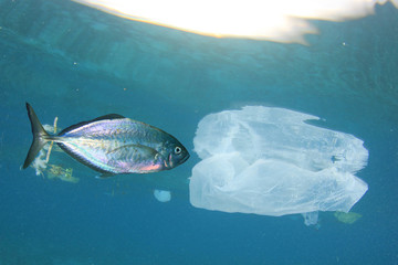 Plastic pollution contaminates seafood. Tuna fish and plastic bag pollution in ocean