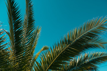 Palm tree in the background of the sky in a hot summer day