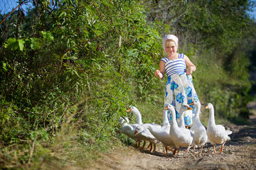 The girl is a preschooler in the village, dressed in a sarafan and shawl, with bare feet tending white geese