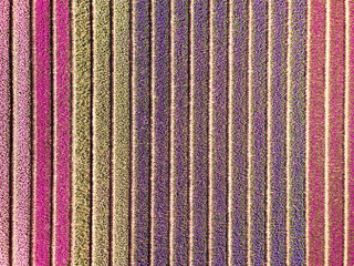 drone top view from colourful flower fields in . drone