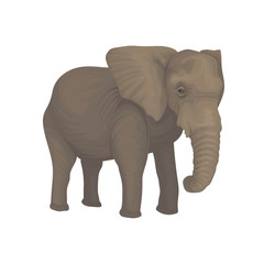 Elephant wild safari animal vector Illustration on a white background