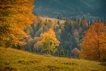 Fall nature of Carpathian mountain creek