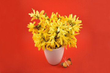 Forsythia stock images. Yellow bouquet on red background. Spring floral decoration. Spring background concept