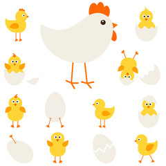 Chickens with hen