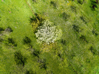 Amazing drone view of trees in the garden at spring day