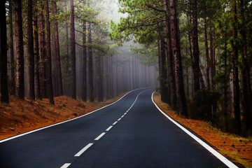 Beautiful mountain road in Tenerife. Road travel concept. Car travel adventure