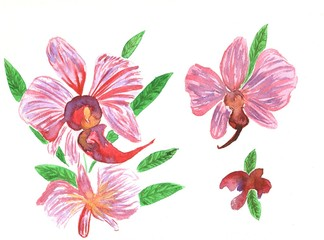 Orchid Flowers, watercolor illustration. A set of different types and with stems, leaves, inflorescences, buds.