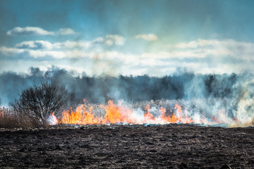Burning grass field in the spring
