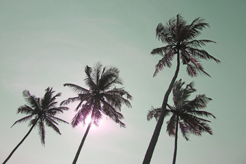 Palm trees silhouettes against pastel sunset on a light green sky. Black silhouettes of palm trees against a background of toned sky. Design with copy space
