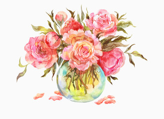 Pink roses or peonies in a glass vase. Watercolor illustration.