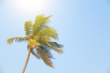 Beautiful palm tree on a blue sky background. Tropical exotic landscape
