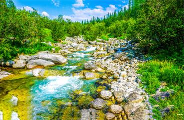 Forest river stream landscape