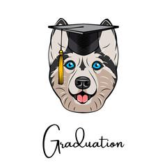 Siberian Husky Graduate. Graduation hat cap. Dog portrait. Vector.
