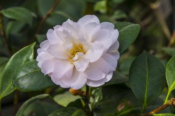 Egzotyczny kwiat
