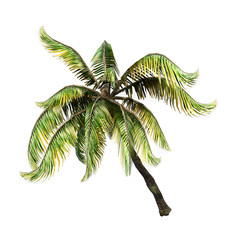 3D Rendering Coconat Palm Tree on White