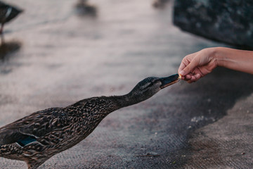 Close up of woman hand feeding food to bird