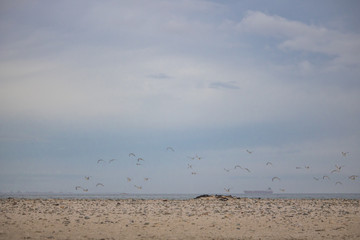Flock on birds in mid flight on Paarden Eiland Beach at sunrise.