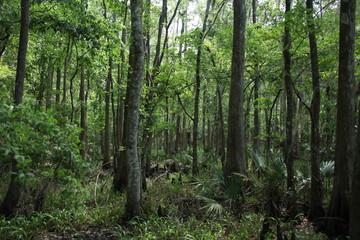 Florida wild forest