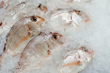 red seabreams fish on ice tray